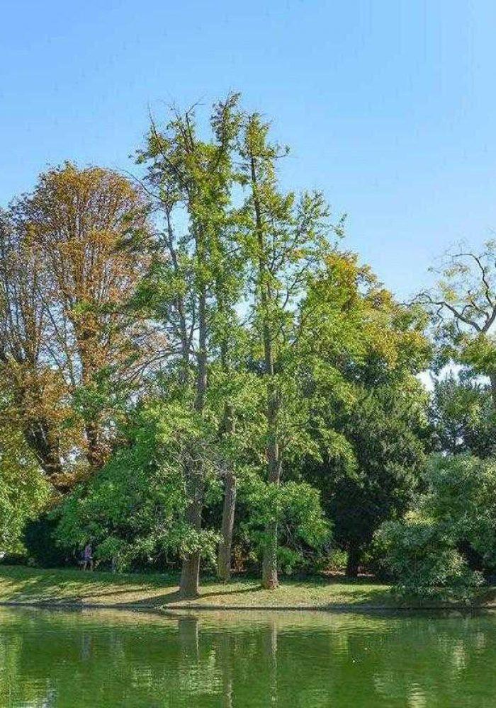 Boulogne-Billancourt, Boulogne-Billancourt : les choses à savoir avant d'acheter un bien